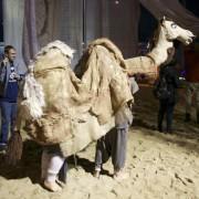 Ankunft Kamel08